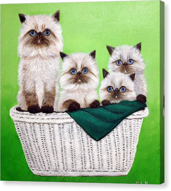 Himalayan Cats Canvas Print - Himalayan Cats In Basket by Carol Iyer