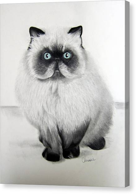 Himalayan Cats Canvas Print - Himalayan Graphite by Chrissie Leander