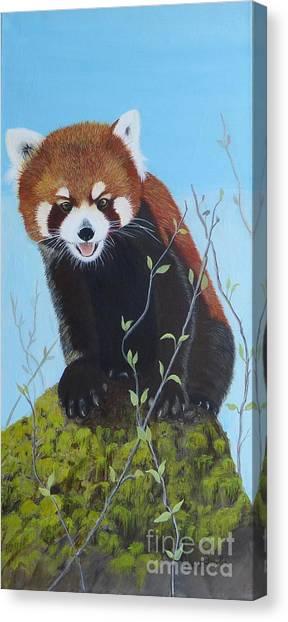 Himalayan Red Panda Canvas Print