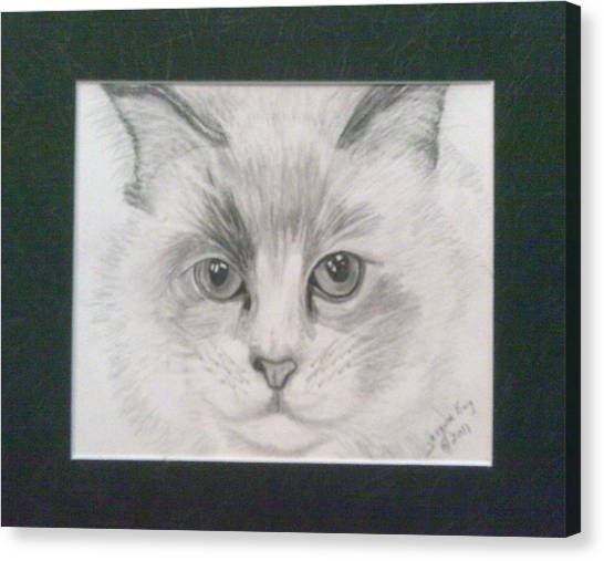 Himalayan Cats Canvas Print - Creme - The Himalayan  by Jacquie King