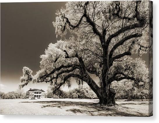 Plantation Canvas Print - Historic Drayton Hall In Charleston South Carolina Live Oak Tree by Dustin K Ryan