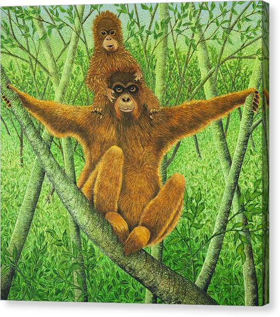 Orangutans Canvas Print - Hnag On In There by Pat Scott