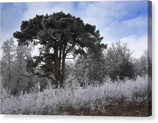 Hoar Frost Canvas Print