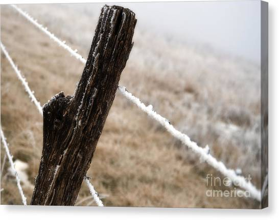 Hoarfrost And Fence Canvas Print by Fred Lassmann