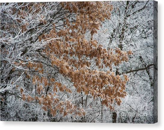 Hoarfrost Trees Canvas Print by Fred Lassmann