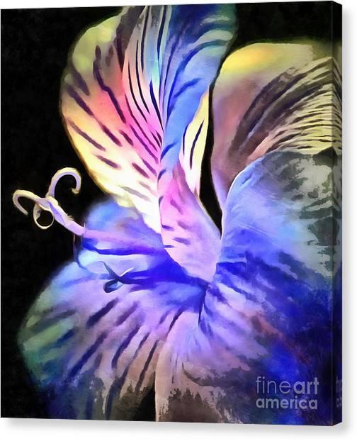 Amaryllis Canvas Print - Holding On To You by Krissy Katsimbras