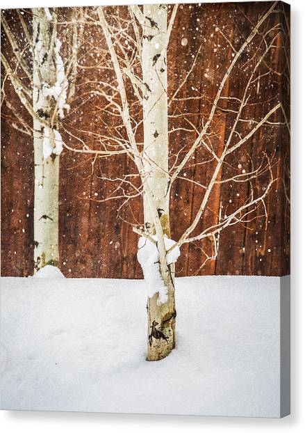Holiday Aspens Canvas Print