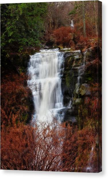 Mossy Forest Canvas Print - Holiday Falls by Lj Lambert