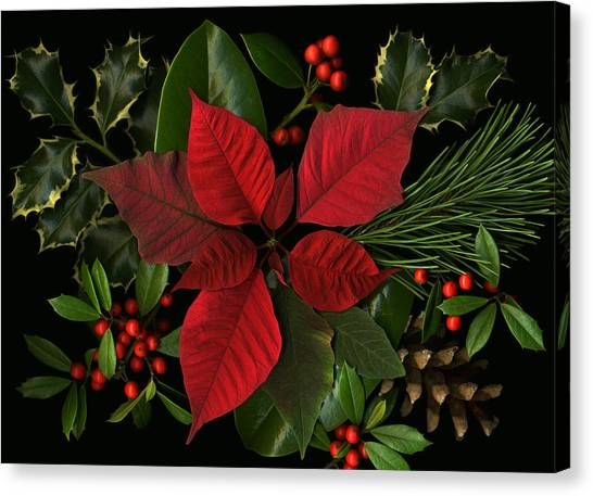 Holiday Greenery Canvas Print by Deborah J Humphries