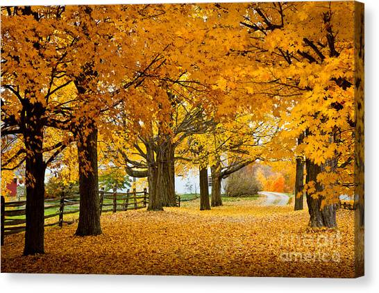 Hollis Farm Canvas Print