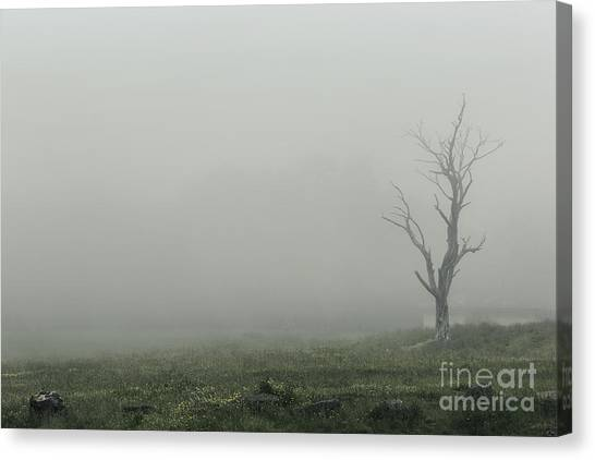 Petrified Forest Canvas Print - Hollow by Andrew Paranavitana