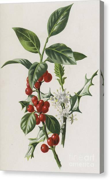 Mistletoe Canvas Print - Holly by Frederick Edward Hulme