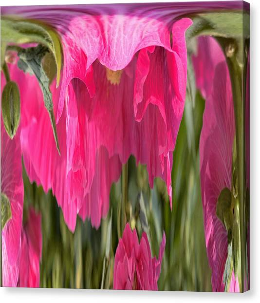 Hollyhock Drape Abstract Canvas Print