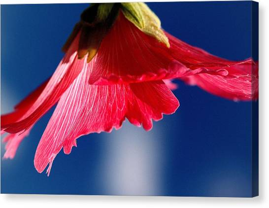 Canvas Print - Hollyhock Red by Russell Wilson