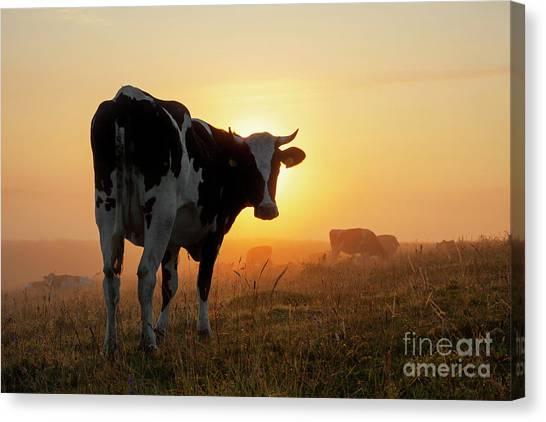 Holstein Friesian Cow Canvas Print