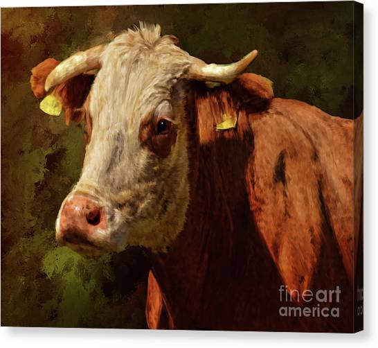 Holy Cow Canvas Print
