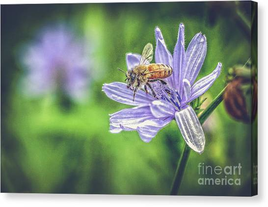 Honey Bee And Flower Canvas Print