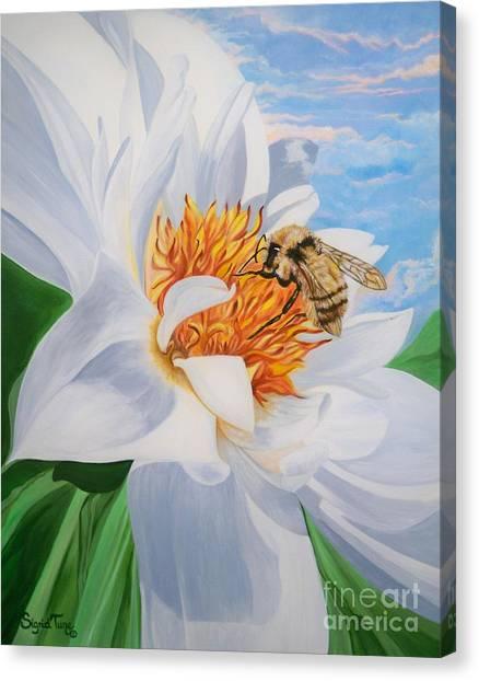 Flygende Lammet Productions     Honey Bee On White Flower Canvas Print