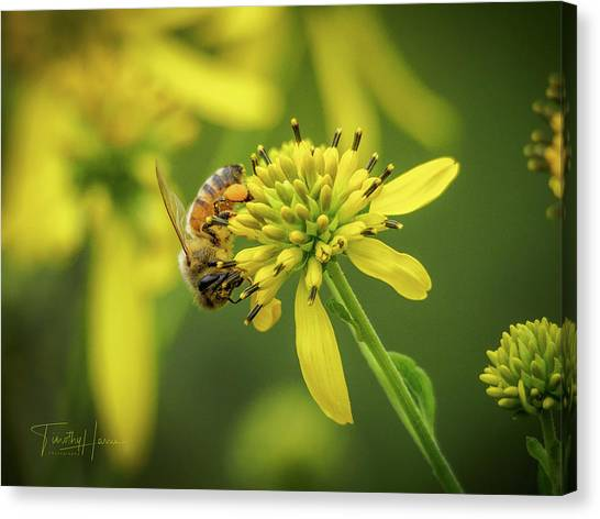 Honeybee 21 Canvas Print