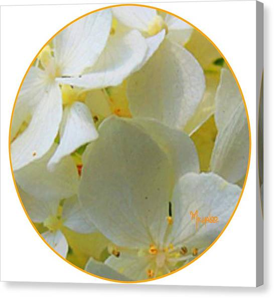 Honeysuckle Blossoms Canvas Print