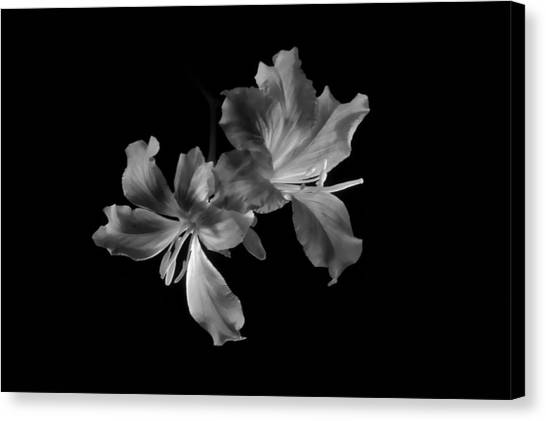 Hong Kong Orchid 4b Canvas Print