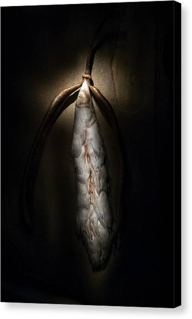 Canvas Print featuring the photograph Hong Kong Orchid Seed Pod #3 by Lou Novick