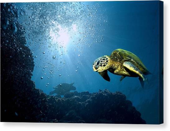 Underwater Caves Canvas Print - Honu Bubbles by Tim Benko