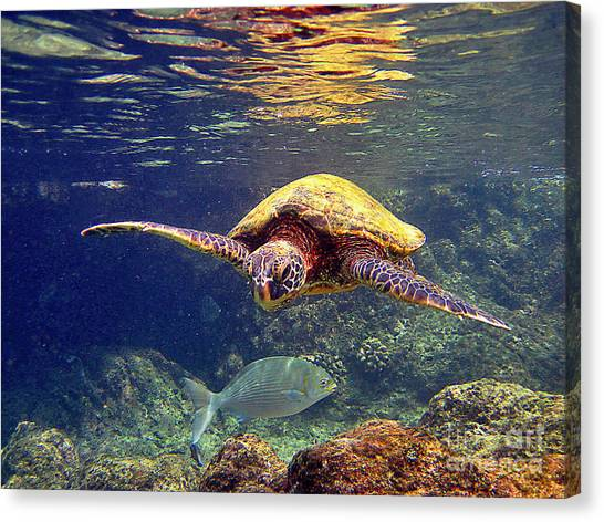 Honu With Reef Fish Canvas Print