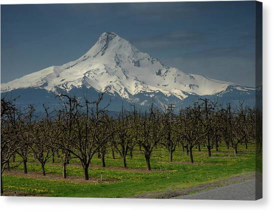Hood Orchard Canvas Print