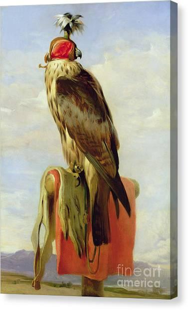 Landseer Canvas Print - Hooded Falcon by Sir Edwin Landseer