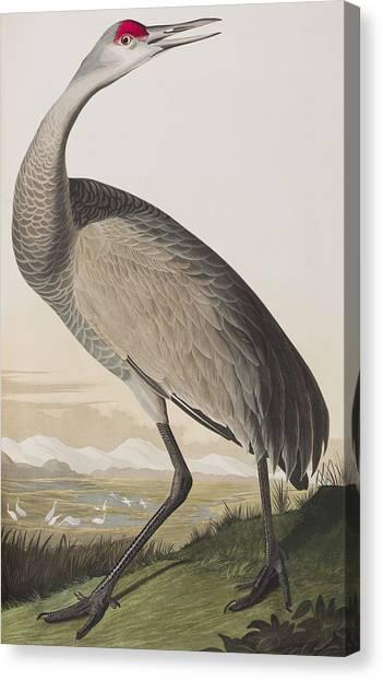 Cranes Canvas Print - Hooping Crane by John James Audubon