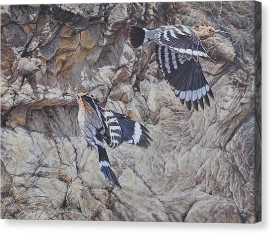 Hoopoes Feeding Canvas Print