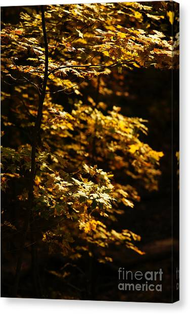 Hope Leaves Canvas Print