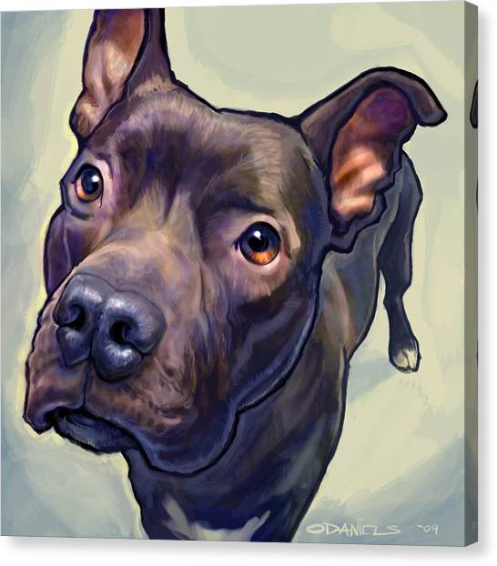 Pit Bull Canvas Print - Hope by Sean ODaniels
