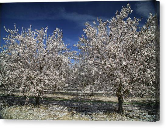 Fruit Trees Canvas Print - Hopes And Dreams by Laurie Search