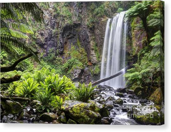 Great Otway National Park Canvas Print - Hopetoun Fall by Rick Mann