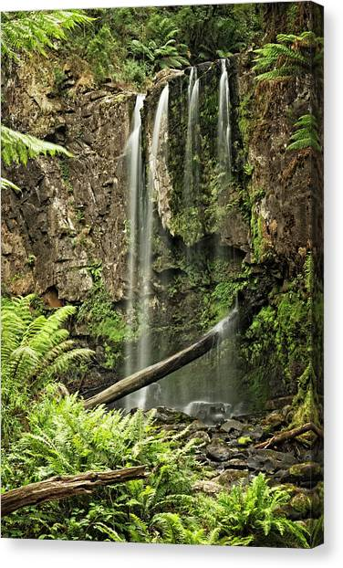 Great Otway National Park Canvas Print - Hopetoun Falls by Catherine Reading