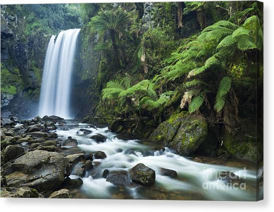 Great Otway National Park Canvas Print - Hopetoun Falls In Great Otway Np In Australia by Sara Winter