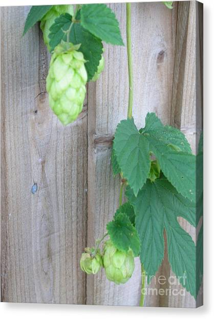 Hops On Fence Canvas Print