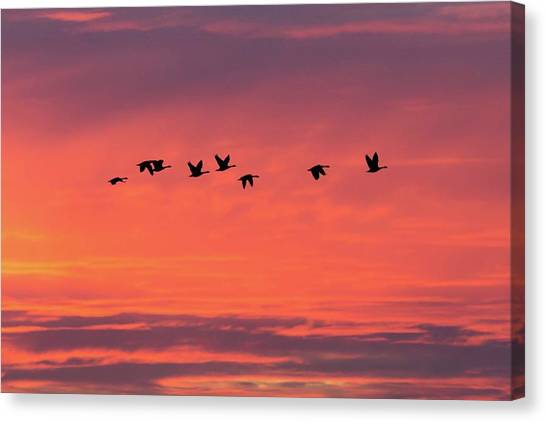 Horicon Marsh Geese Canvas Print