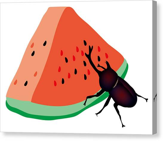 Canvas Print - Horn Beetle Is Eating A Piece Of Red Watermelon by Moto-hal