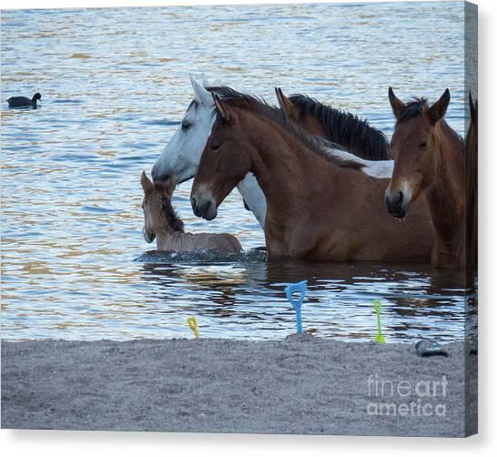Horse 6 Canvas Print