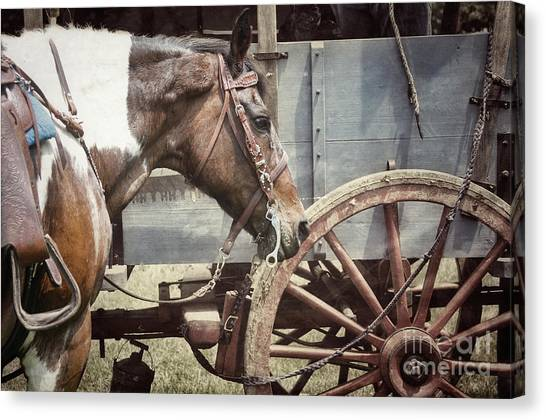 Horse And Wheel Canvas Print by Steven Digman