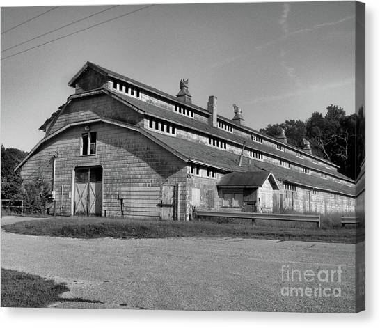 Horse Barn Exited Canvas Print