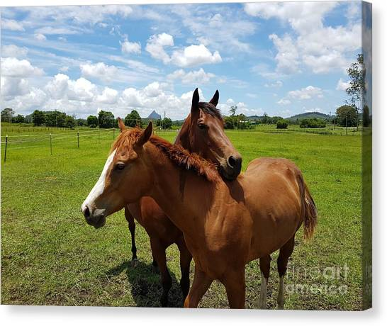 Horse Cuddles Canvas Print