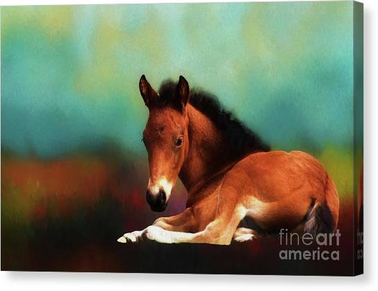 Horse Foal Canvas Print