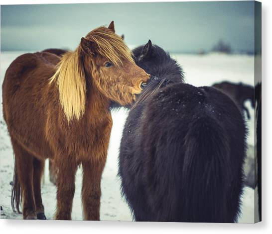 Horse Friends Forever Canvas Print