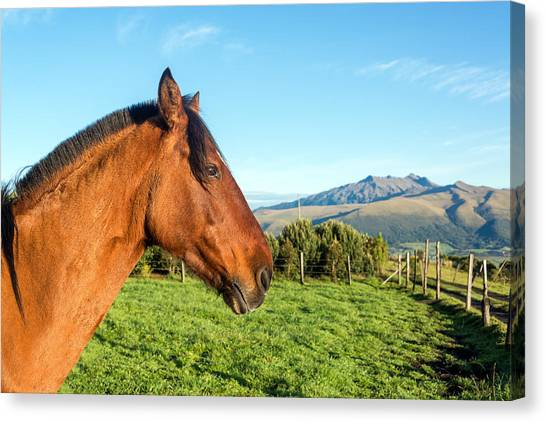 Cotopaxi Canvas Print - Horse Head Closeup by Jess Kraft