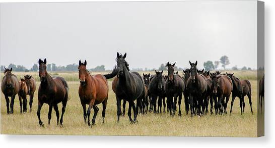 Horse Herd On The Hungarian Puszta Canvas Print