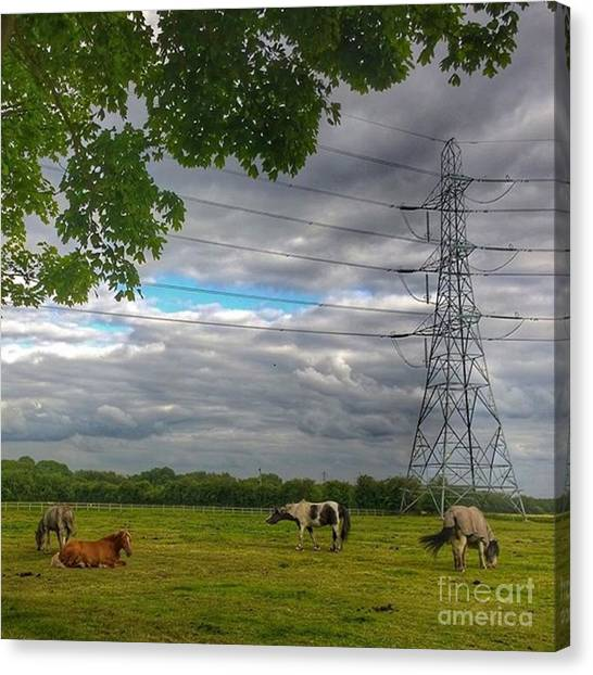 Ponies Canvas Print - #horse #hobby #horses #equine by Abbie Shores